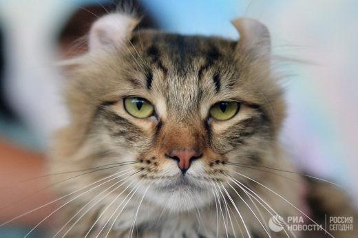 Американский пенсионер поселил у себя дома 300 кошек