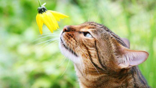 В Канаде кошка научилась дарить цветы