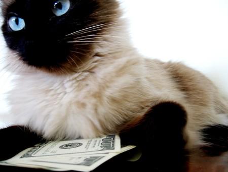 Два американских кота внезапно стали миллионерами