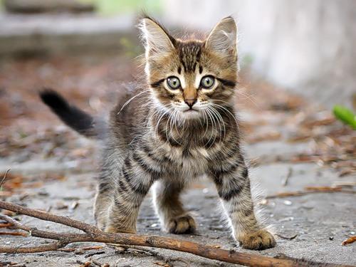 Бездомных кошек и собак в Самаре можно взять «в прокат»