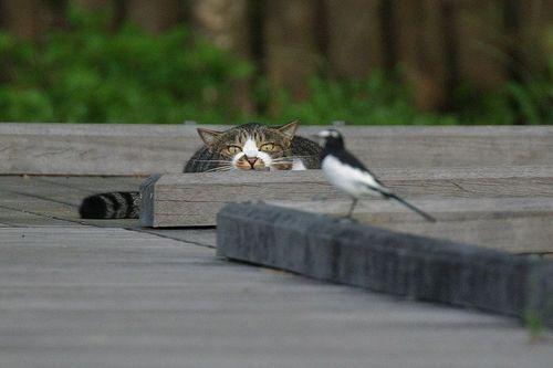 Американские кошки убивают по 4 миллиарда птиц ежегодно