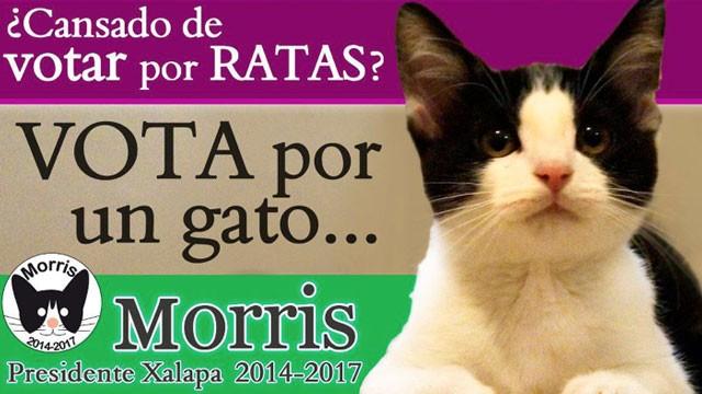 В Мексике на пост мэра баллотируется кот