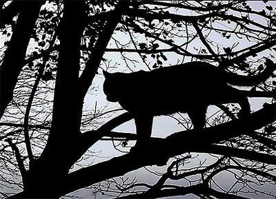 Спасатели вызволили кота, который застрял на дереве на четыре дня