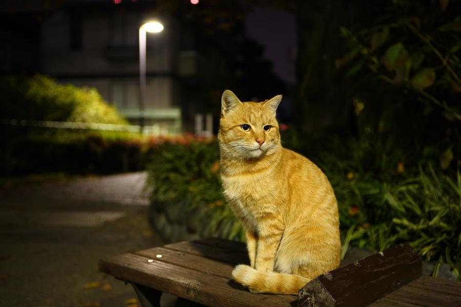 Ученые выяснили, что делают коты и кошки по ночам