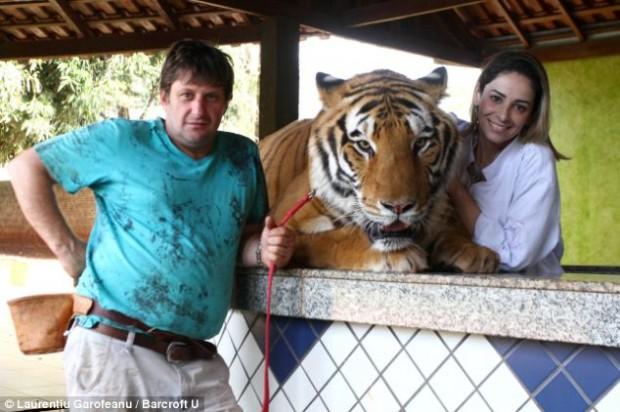 Житель Бразилии завел в своем доме семь тигров