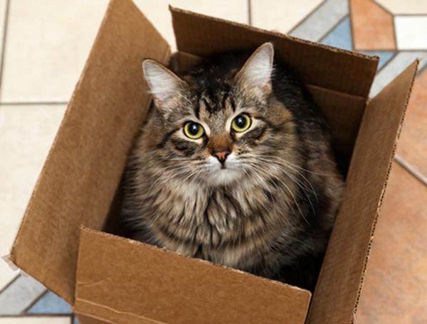 Ученые объяснили тягу кошек к коробкам