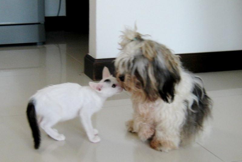 Бездомная собака выкормила осиротевшего котенка