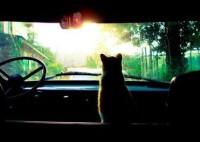 Кошка из Россоши 500 километров ехала под капотом машины