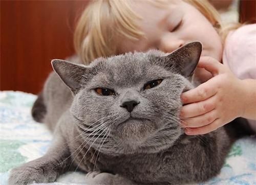 Ученые: не надо гладить свою кошку