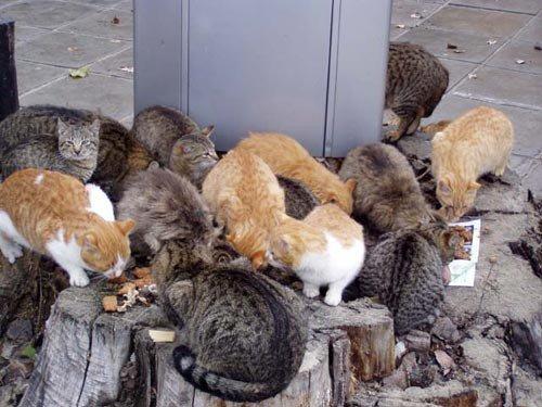 Власти Риги обеспокоились судьбой бездомных котов