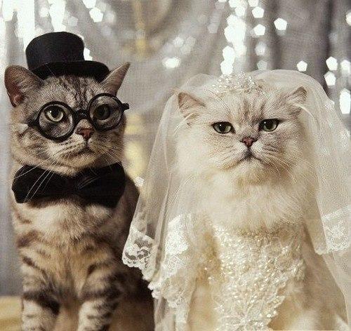В Петербурге открывается магазин со свадебными платьями для кошек