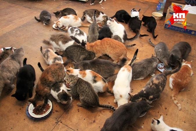 Уфимка поселила в своем доме 60 кошек