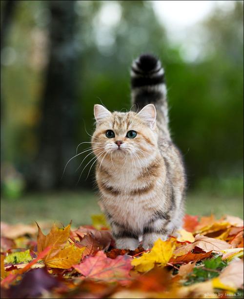 Осенняя фотозарисовка
