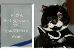 Едва не сгоревший с диваном кот получил премию за то, что выжил