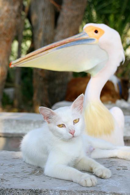 Коты-подкидыши в киевском зоопарке воруют еду у пеликанов