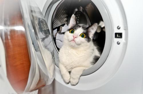 Финская кошка выжила после 40-минутной стирки в машинке