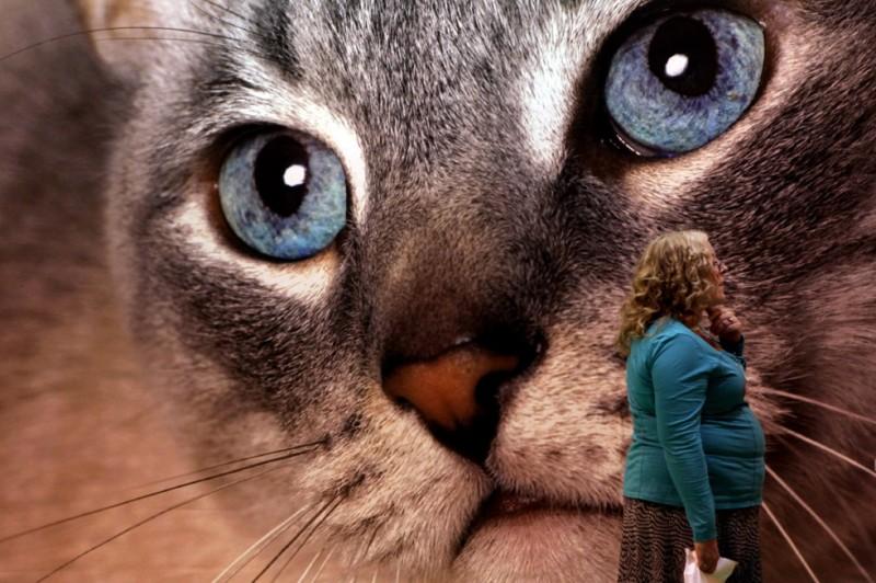 Существуют ли в Англии легендарные большие кошки?